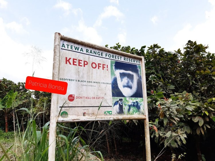 Full Text: A Rocha Ghana Commemorates International Day of Forests