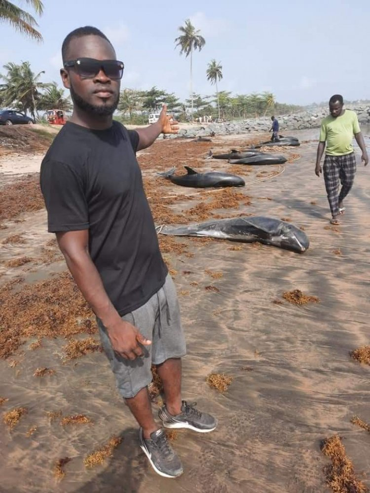 60 Dead Dolphines Washed Ashore Brawire Beach
