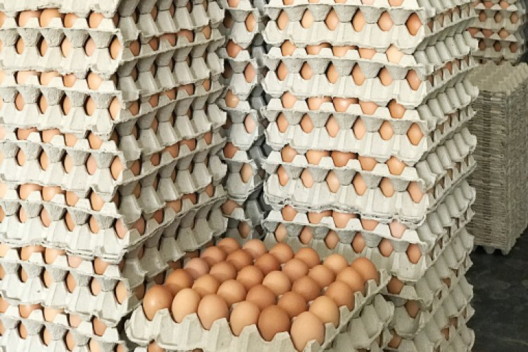 Egg Price Shoots Up As 46,000 Birds Infected With Bird Flu Are Destroyed