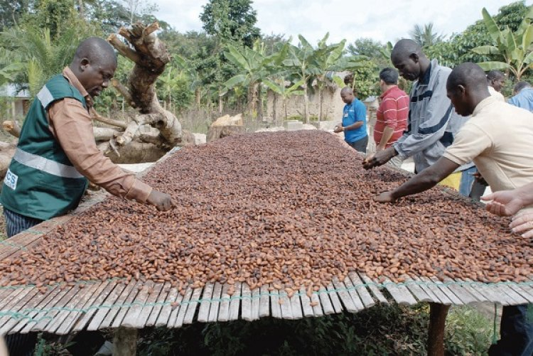 Pilot Registration Of Some Cocoa Farmers For Pensions Begins On Monday, August 23