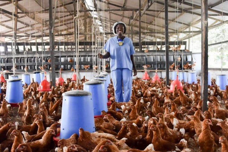 Bird Flu Outbreak Expected To End Within Three Months- Veterinary Service